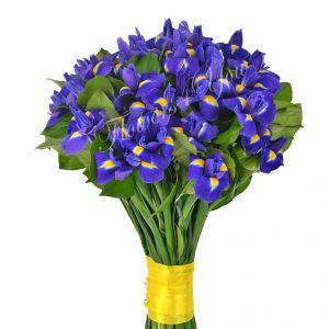 buchet-iris-13009235_normal